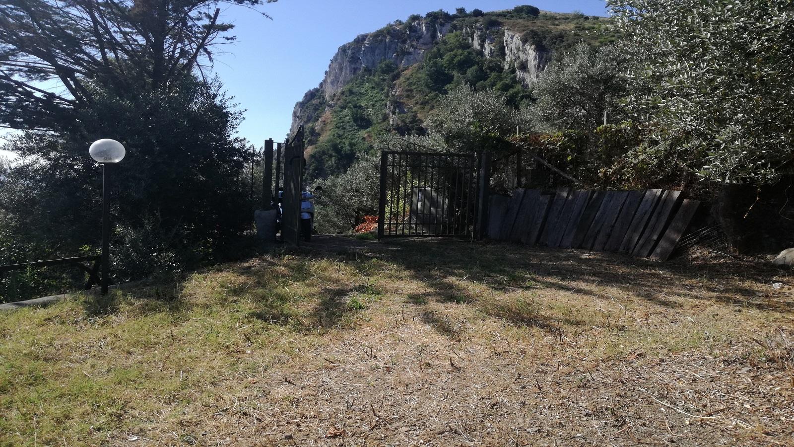 Uliveto panoramico a Massa Lubrense